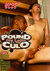 Pound My Latin Culo