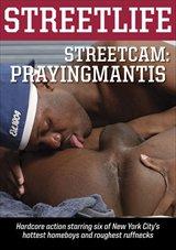 StreetCam: Prayingmantis