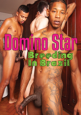 Domino Star Breeding In Brazil