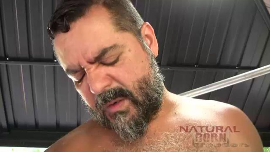 Lorenzo Bilbao Is A Bear to Remember, starring Rod Drainer, Trace Leches and Lorenzo Bilbao, produced by Natural Born Breeders and Thunderhead Productions. Video Categories: Threeway, Bear, Latin, Blowjob, Anal and Mature.