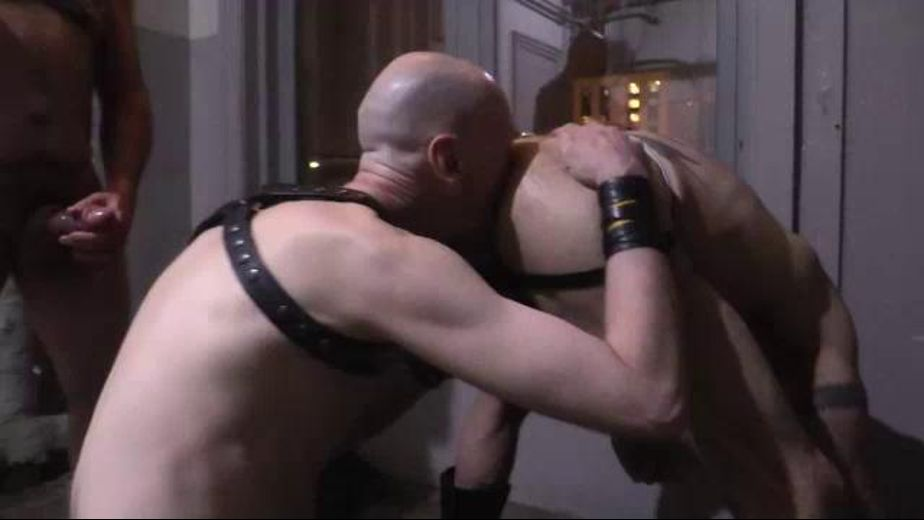 Onslaught by a Gnarly Bear and His Henchmen, starring Mischief, produced by Bad Seed. Video Categories: Fetish, Bareback, Leather, Bear and Mature.